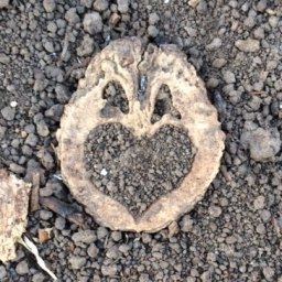 Walnut Love