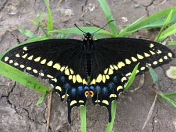 give us a kiss - 10