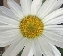 give us a kiss - 2
