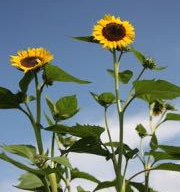 give us a kiss - 36