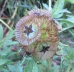 up close flowers - 1