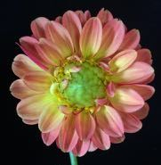 up close flowers - 2